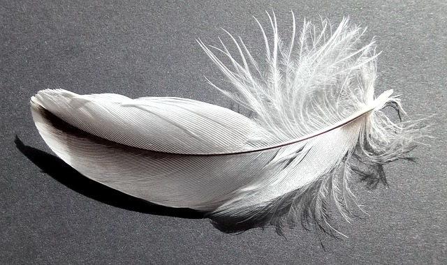 white feather picture