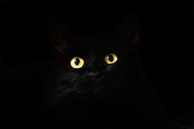 jet-black picture